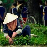 日本の証券会社が不思議な理由でベトナム上場企業の筆頭株主となったカラクリ2