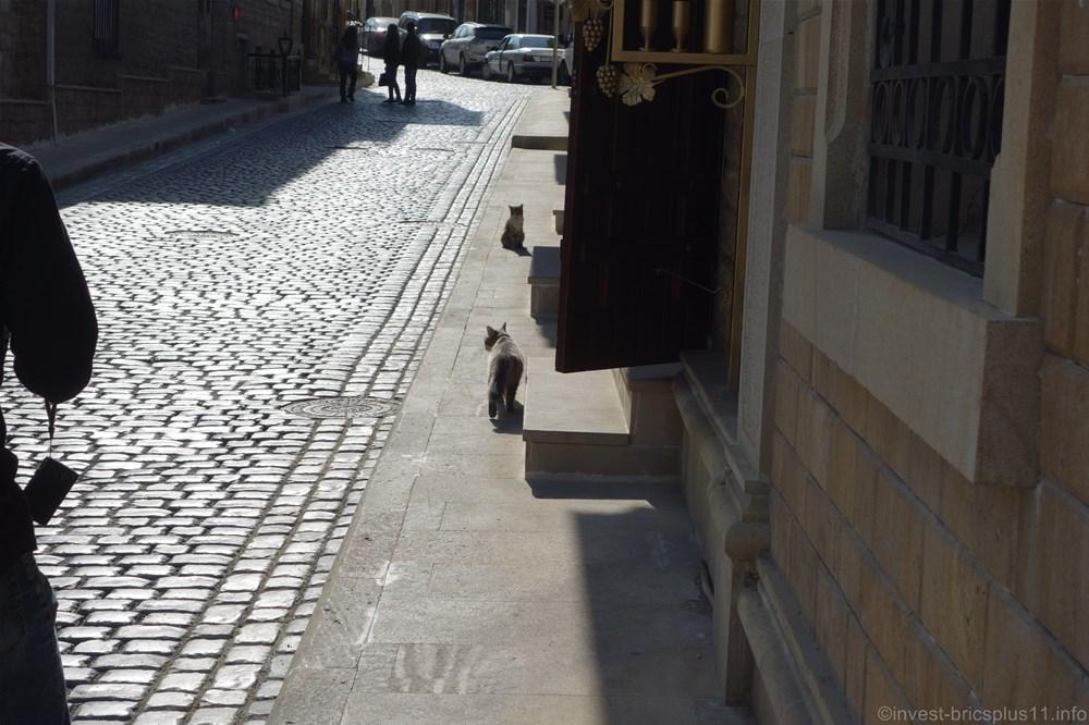 アゼルバイジャンの猫達
